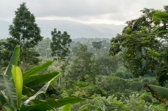 بنیاد جهانی کاکائو و کمیسیون جنگلداری غنا بر تعهد خود در مورد پایان جنگل زدایی تأکید کردند