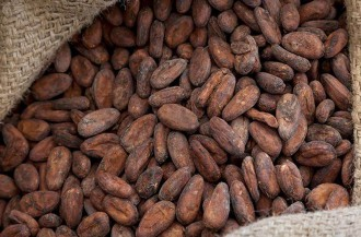 فررو به هدفتولید 100٪ کاکائو با منابع پایدار دست یافت.